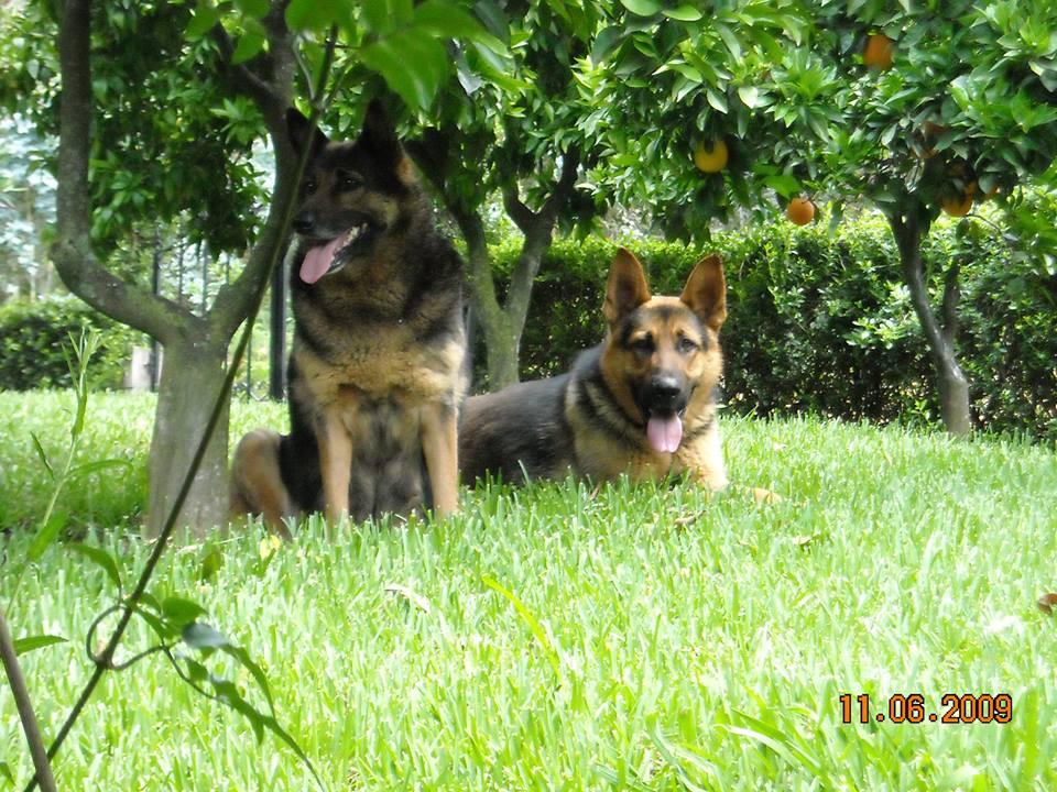 Kikas e Zorro no jardim